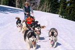 Deer Valley Dog Sledding