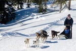 Big White Dogsled